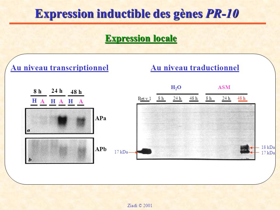 Expression inductible des gènes PR-10