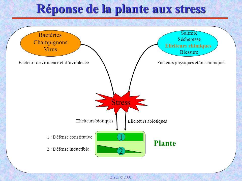 Réponse de la plante aux stress