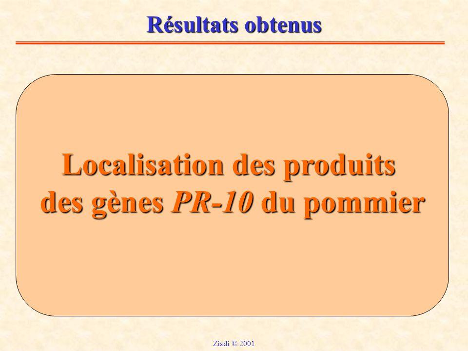 Localisation des produits des gènes PR-10 du pommier