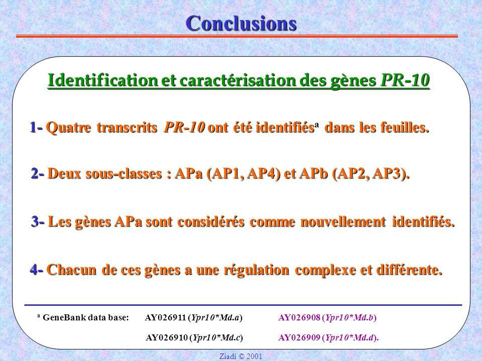 Conclusions Identification et caractérisation des gènes PR-10
