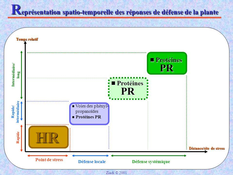 Représentation spatio-temporelle des réponses de défense de la plante