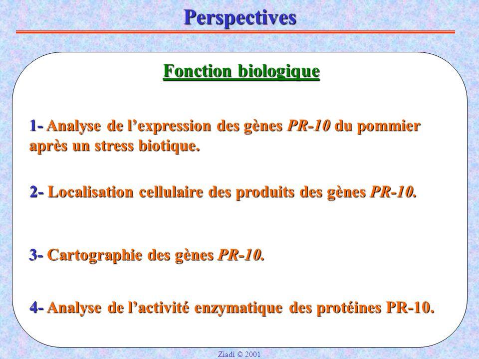 Perspectives Fonction biologique