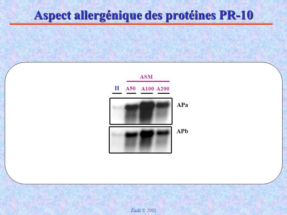 Aspect allergénique des protéines PR-10