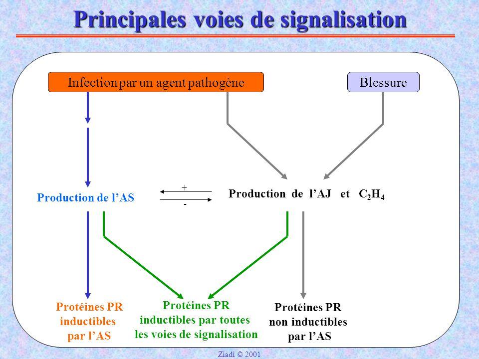 Principales voies de signalisation