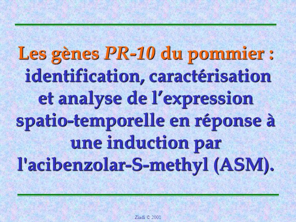 Les gènes PR-10 du pommier : identification, caractérisation et analyse de l'expression spatio-temporelle en réponse à une induction par l acibenzolar-S-methyl (ASM).