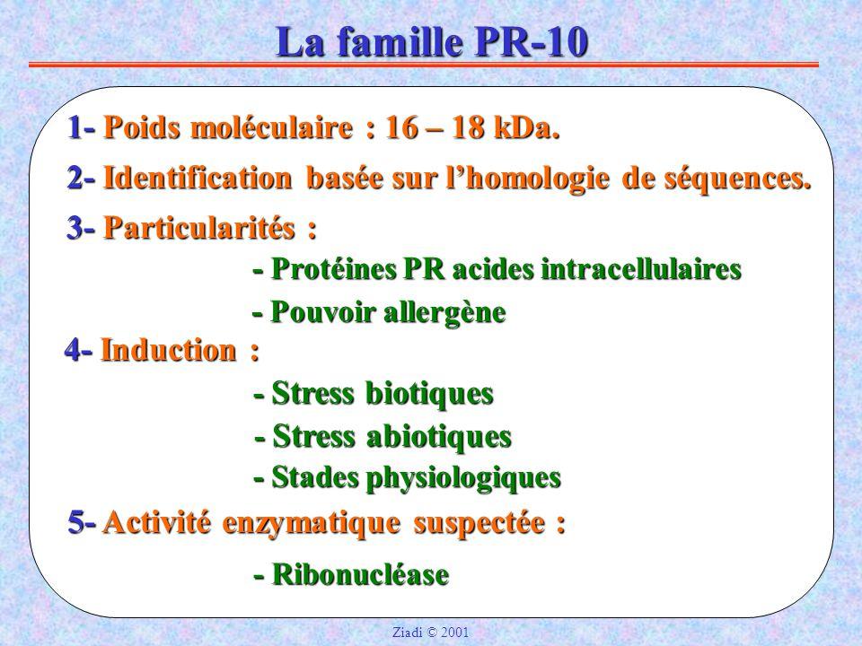 La famille PR-10 1- Poids moléculaire : 16 – 18 kDa.