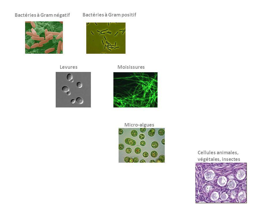 Bactéries à Gram négatif