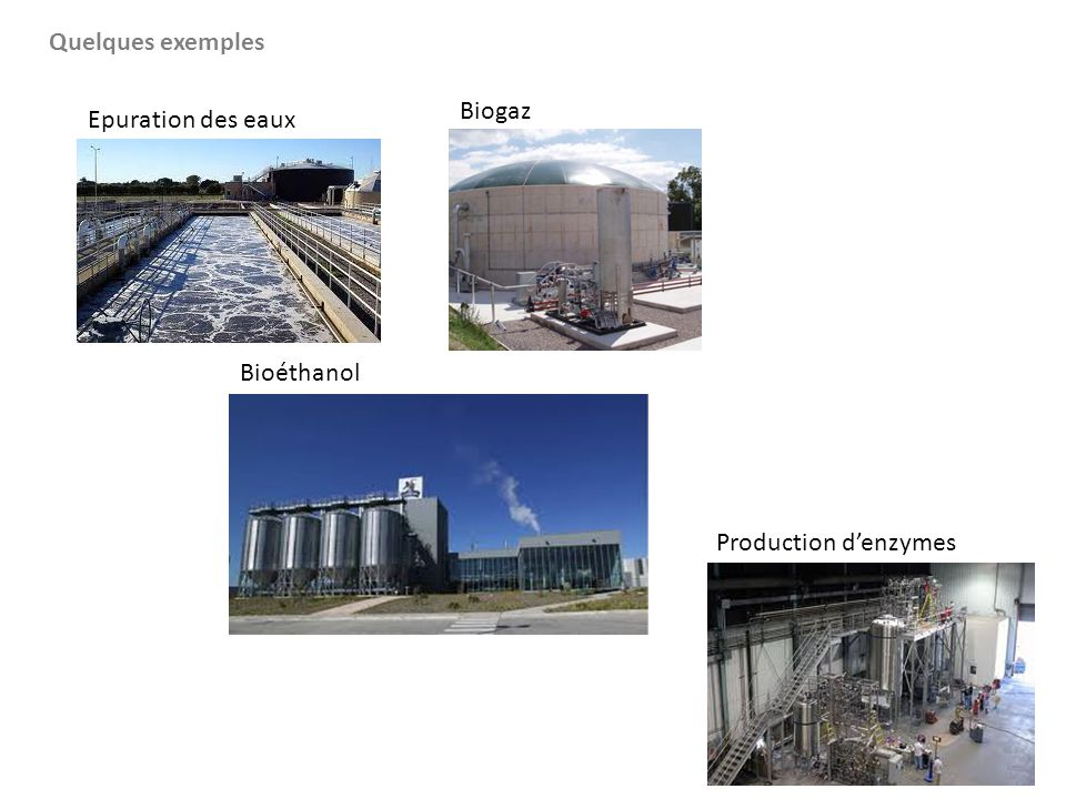 Quelques exemples Biogaz Epuration des eaux Bioéthanol Production d'enzymes