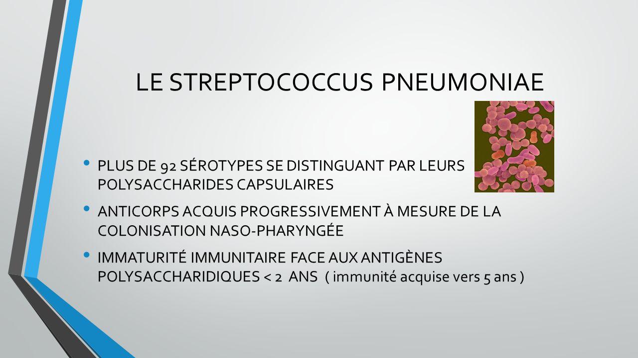 LE STREPTOCOCCUS PNEUMONIAE