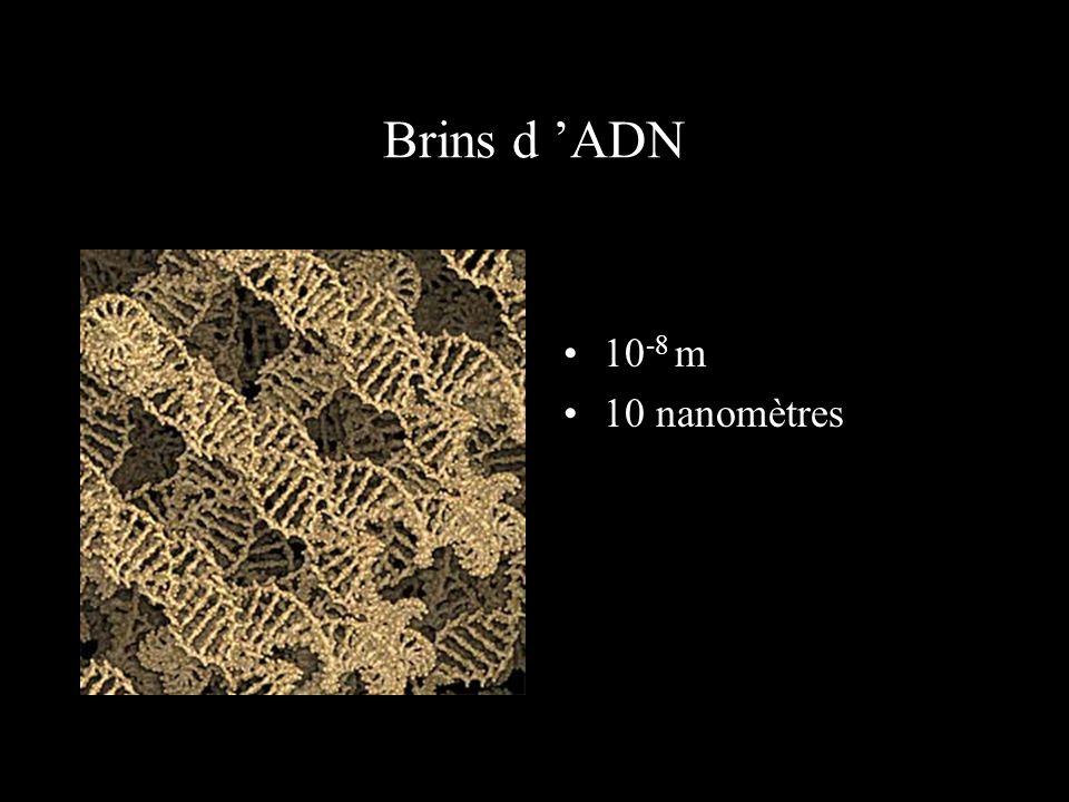 Brins d 'ADN 10-8 m 10 nanomètres