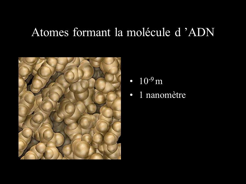 Atomes formant la molécule d 'ADN