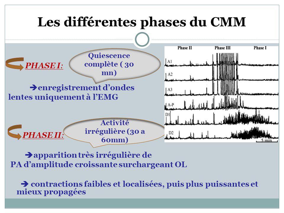 Les différentes phases du CMM