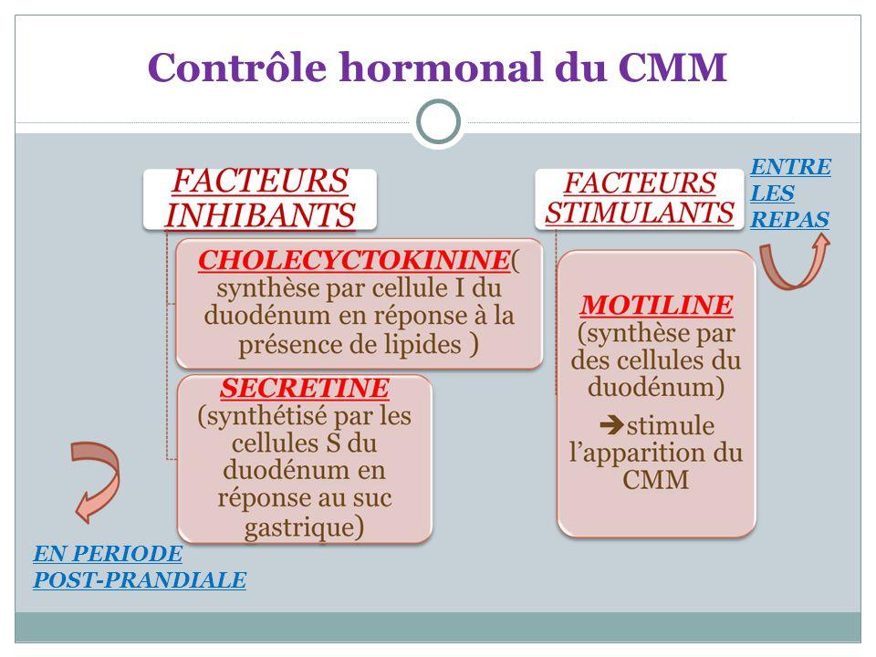 Contrôle hormonal du CMM