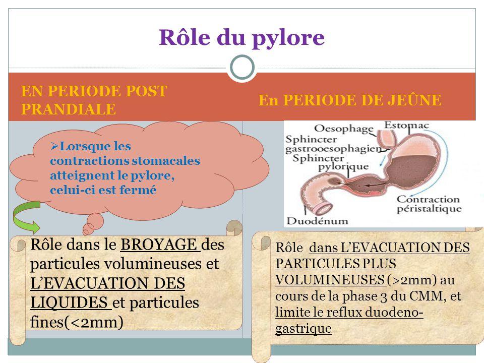 Rôle du pylore Rôle dans le BROYAGE des particules volumineuses et