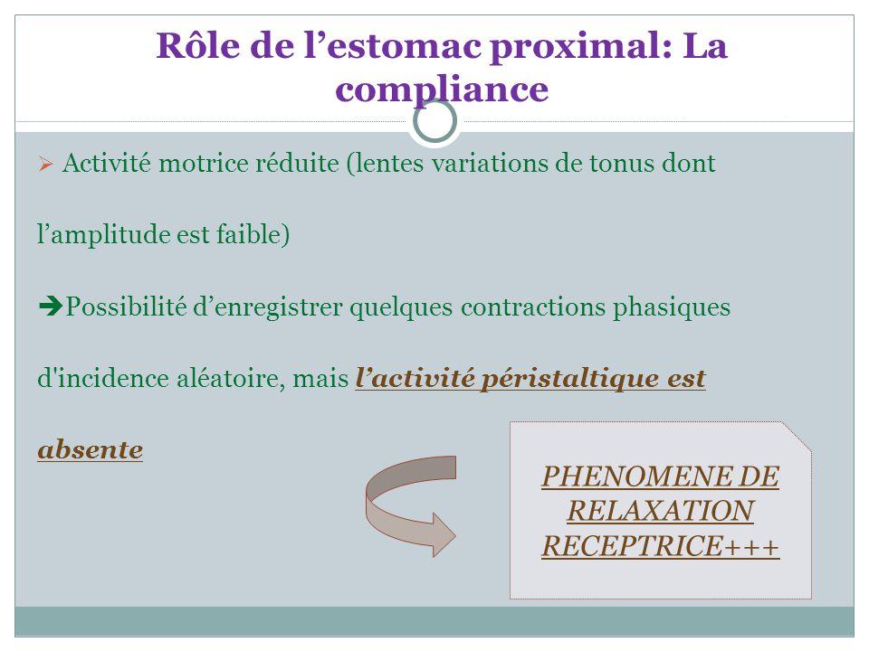 Rôle de l'estomac proximal: La compliance