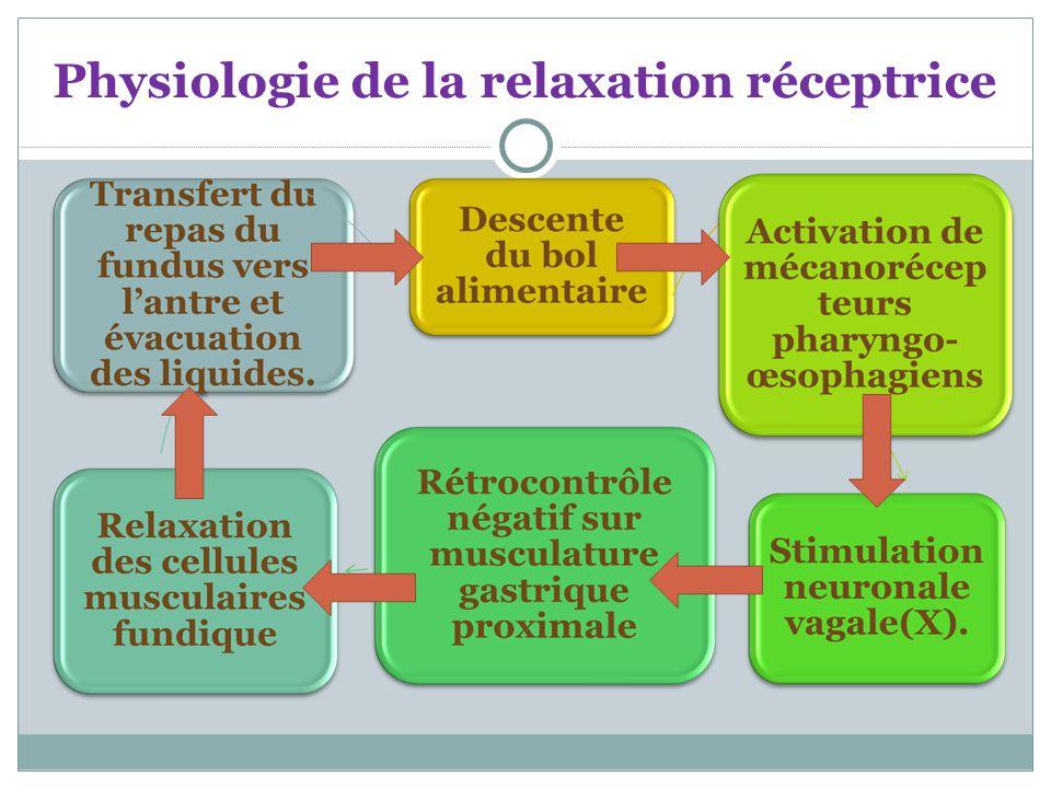 Physiologie de la relaxation réceptrice