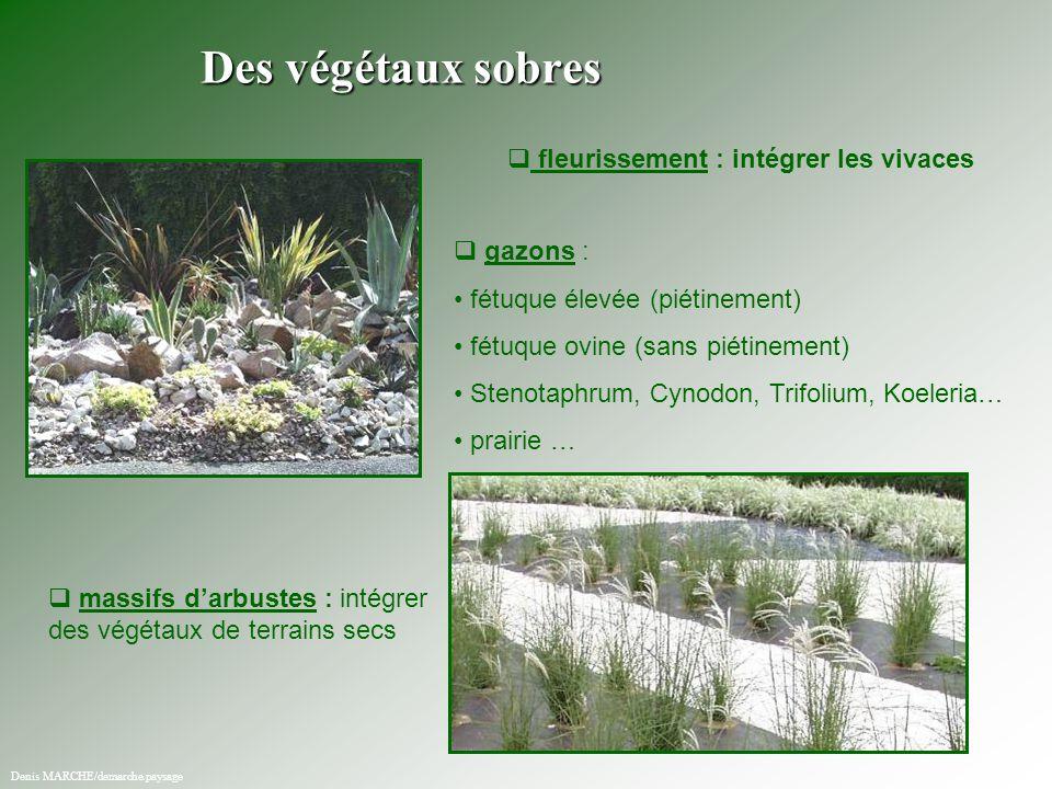 Des végétaux sobres fleurissement : intégrer les vivaces gazons :