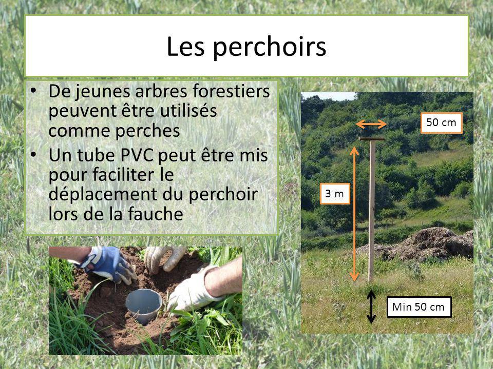 Les perchoirs De jeunes arbres forestiers peuvent être utilisés comme perches.