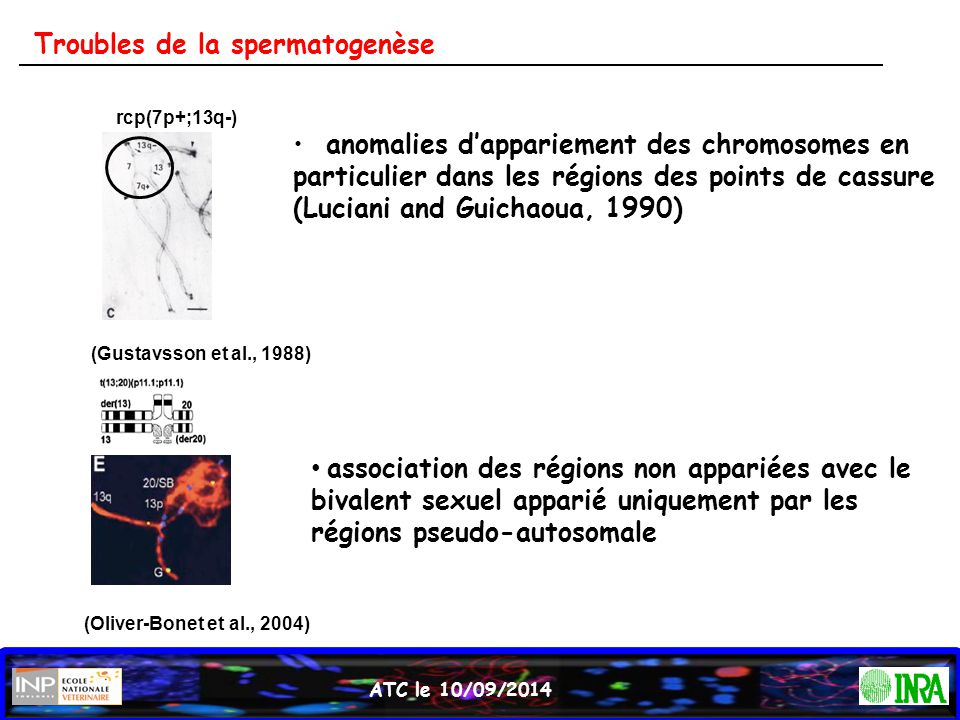 Troubles de la spermatogenèse
