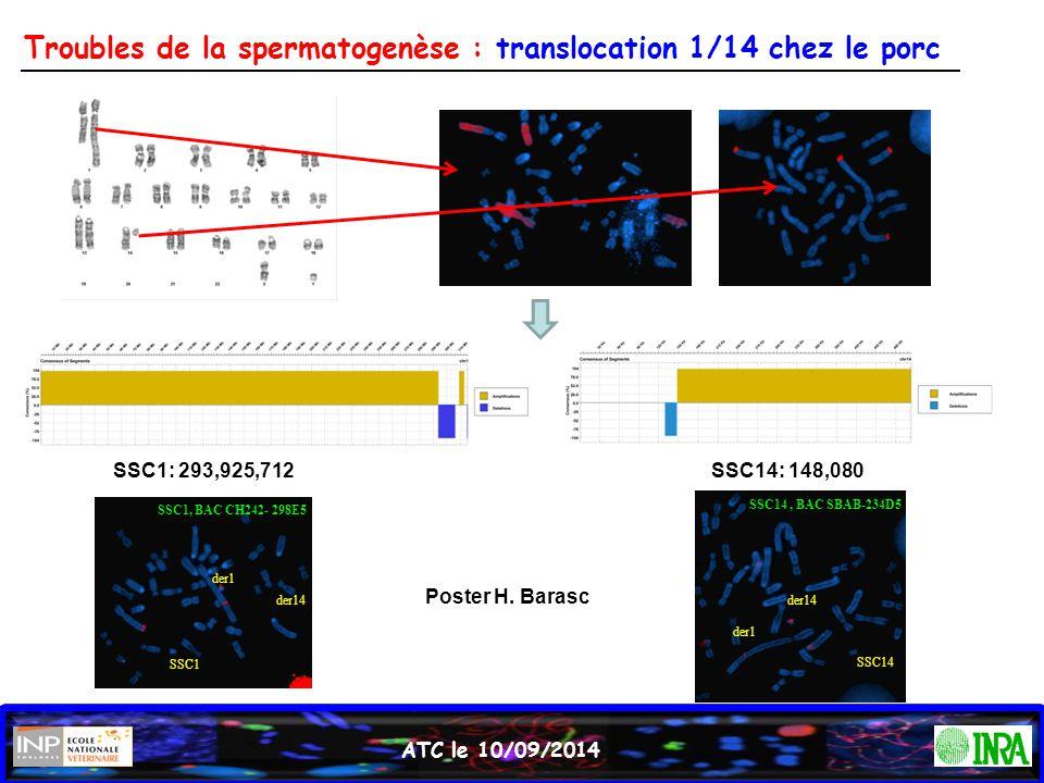 Troubles de la spermatogenèse : translocation 1/14 chez le porc