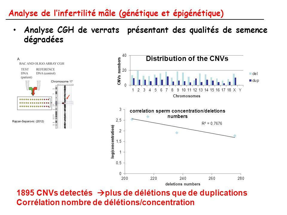 Analyse de l'infertilité mâle (génétique et épigénétique)