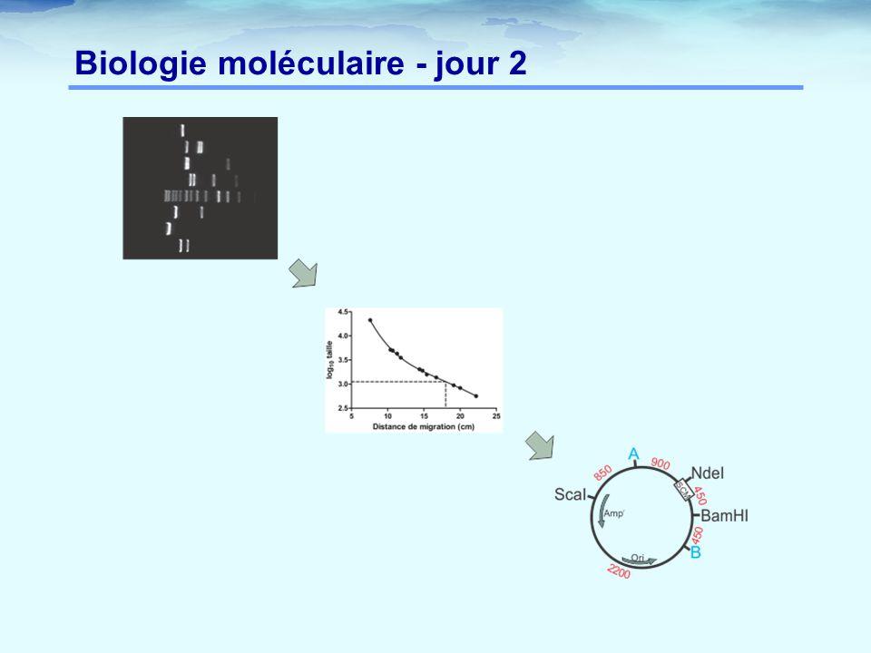 Biologie moléculaire - jour 2