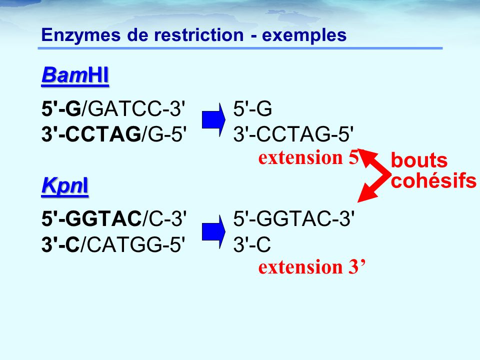 Enzymes de restriction - exemples