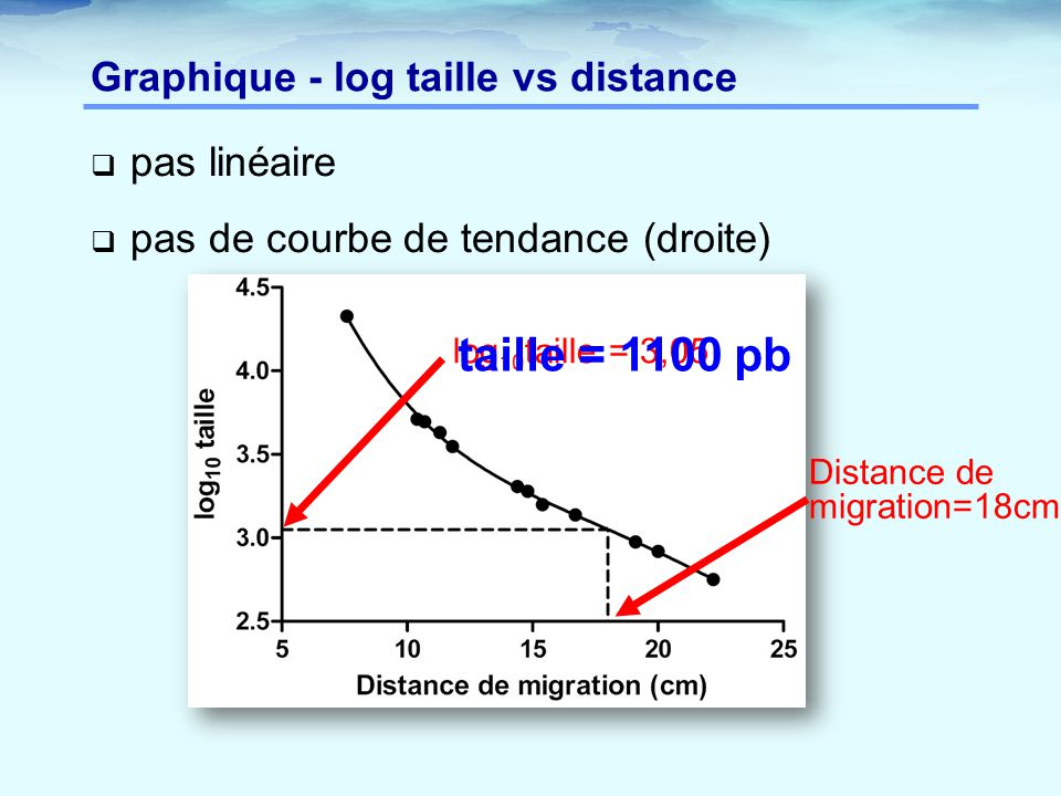 Graphique - log taille vs distance