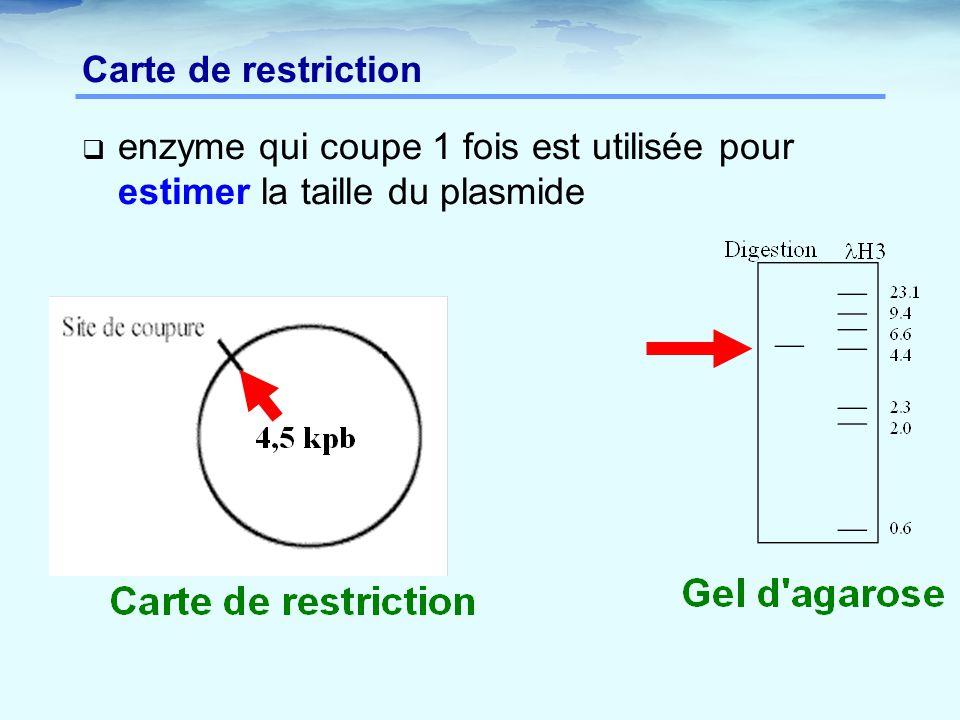 Carte de restriction enzyme qui coupe 1 fois est utilisée pour estimer la taille du plasmide
