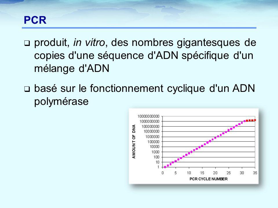 PCR produit, in vitro, des nombres gigantesques de copies d une séquence d ADN spécifique d un mélange d ADN.