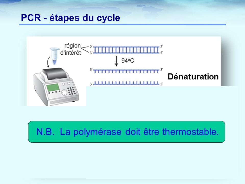 PCR - étapes du cycle N.B. La polymérase doit être thermostable.