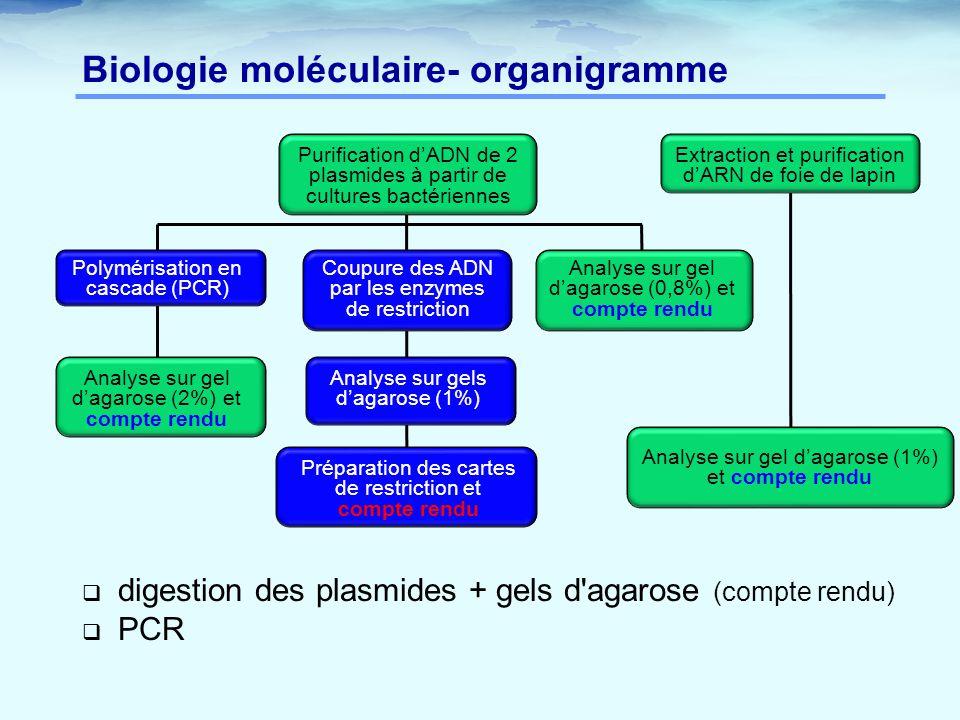 Biologie moléculaire- organigramme