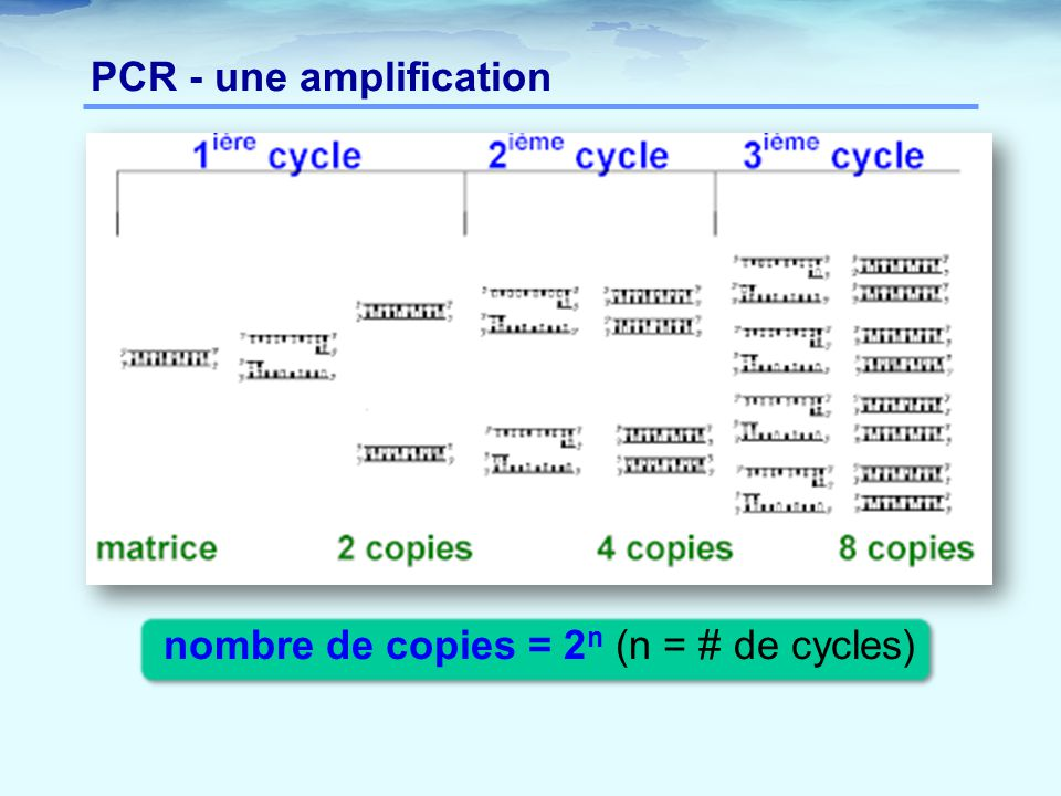 PCR - une amplification