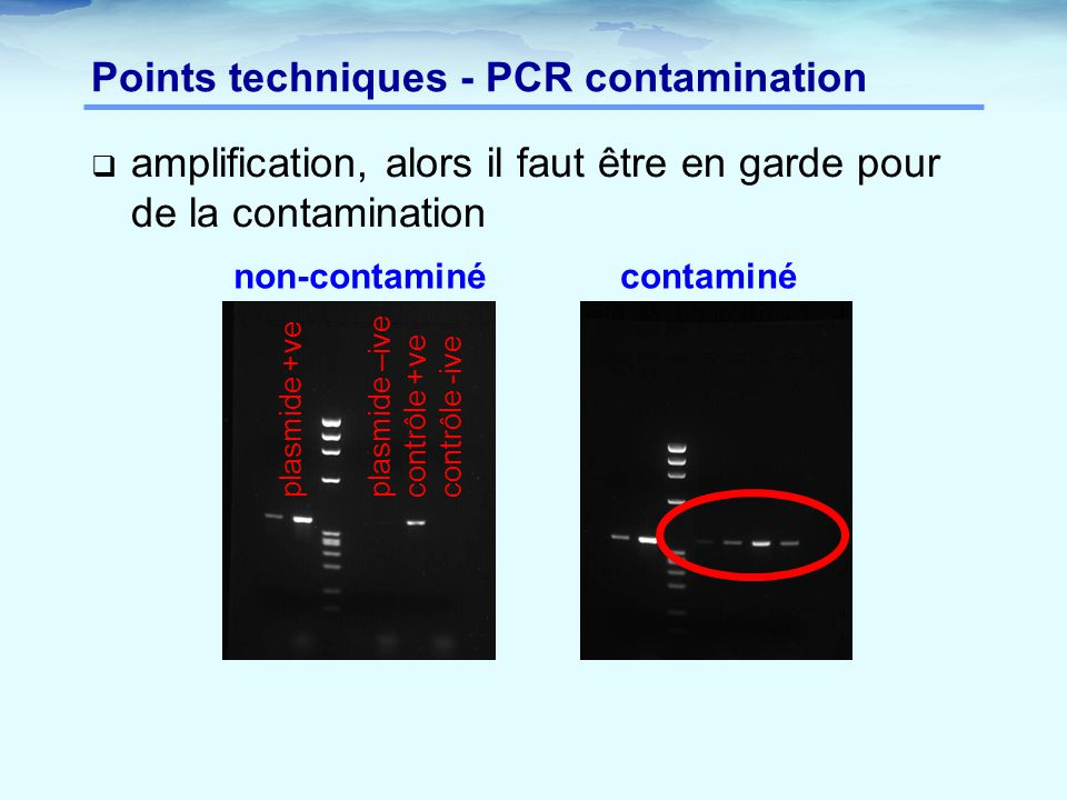 Points techniques - PCR contamination