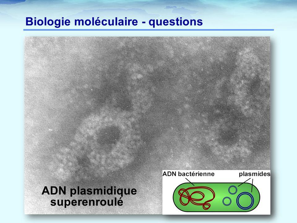 Biologie moléculaire - questions
