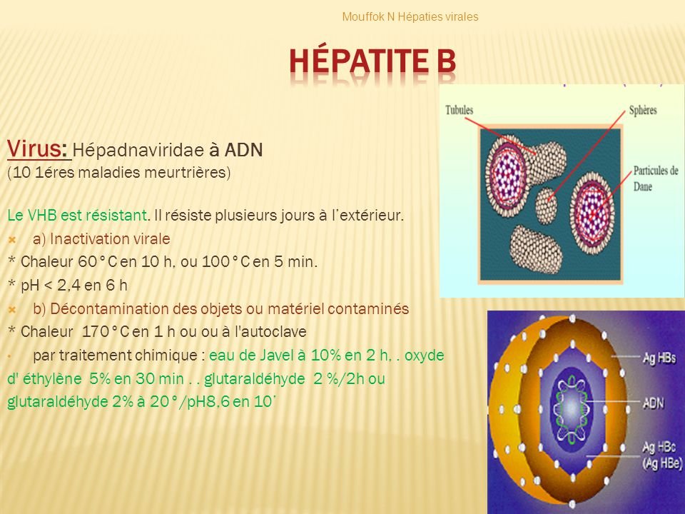 Hépatite B Virus: Hépadnaviridae à ADN (10 1éres maladies meurtrières)