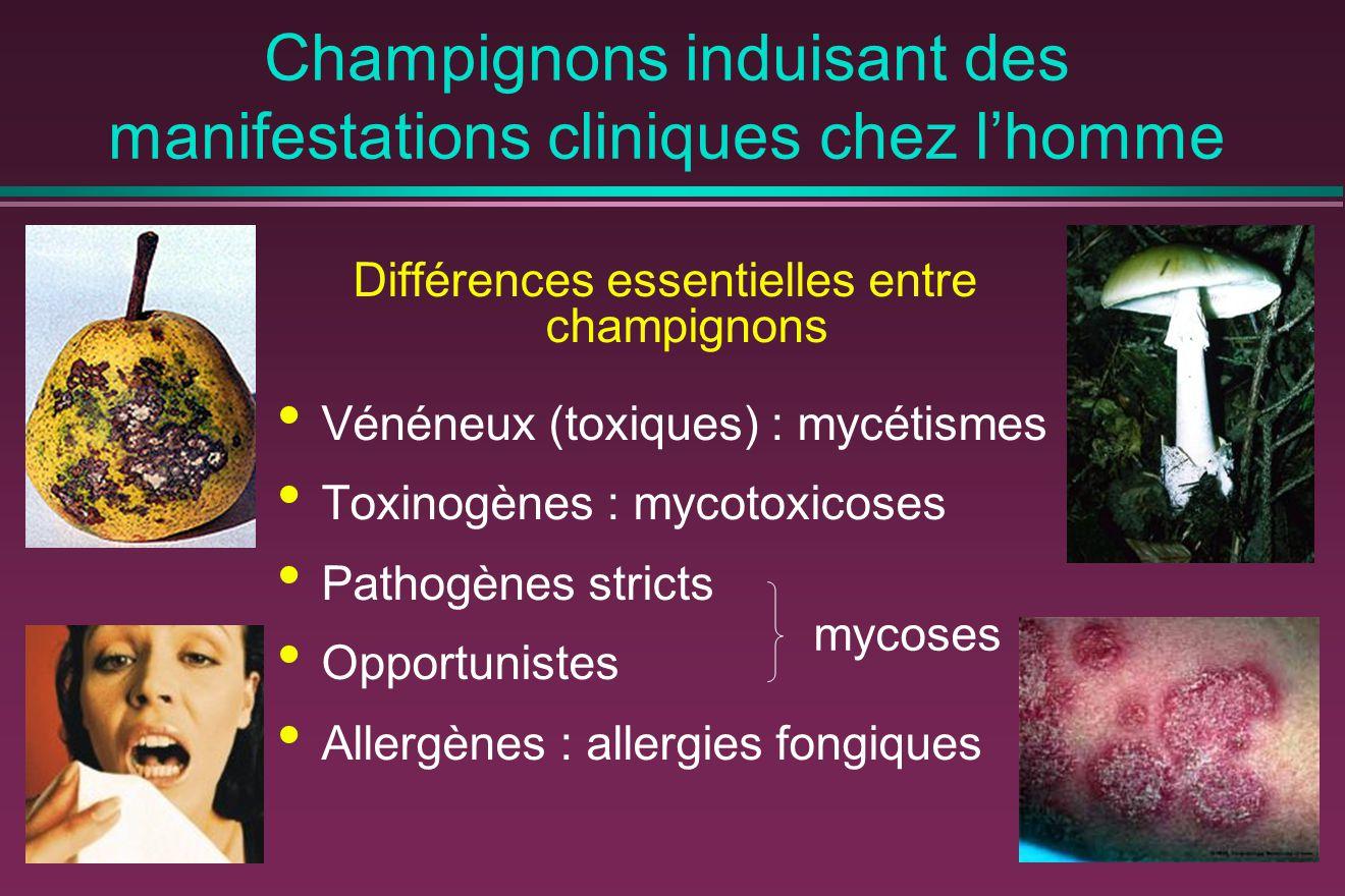 Champignons induisant des manifestations cliniques chez l'homme