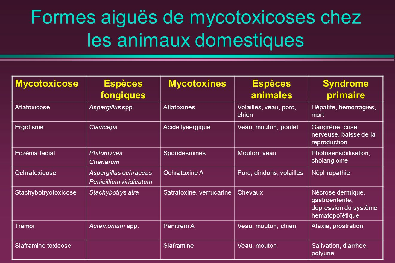 Formes aiguës de mycotoxicoses chez les animaux domestiques