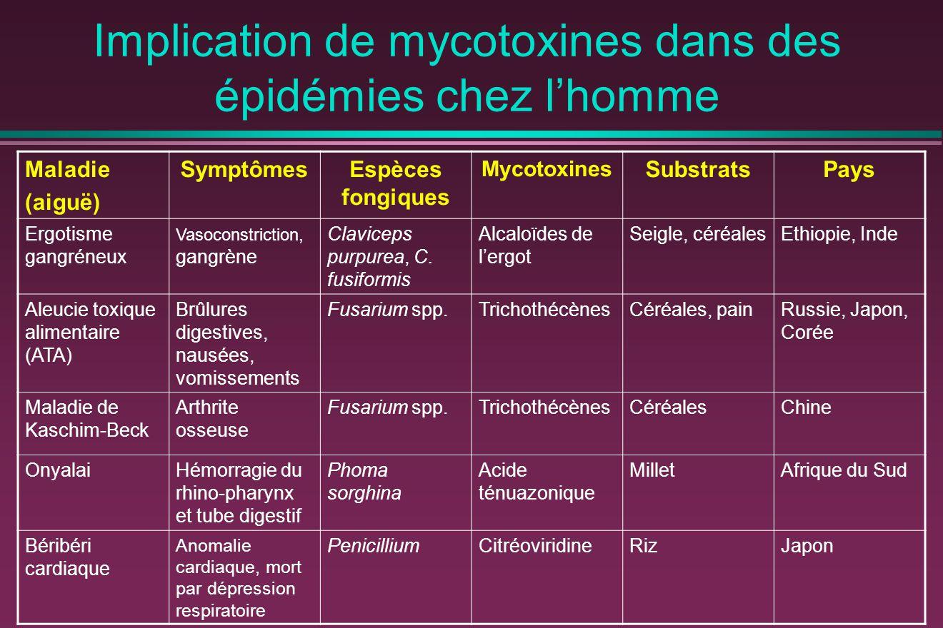 Implication de mycotoxines dans des épidémies chez l'homme