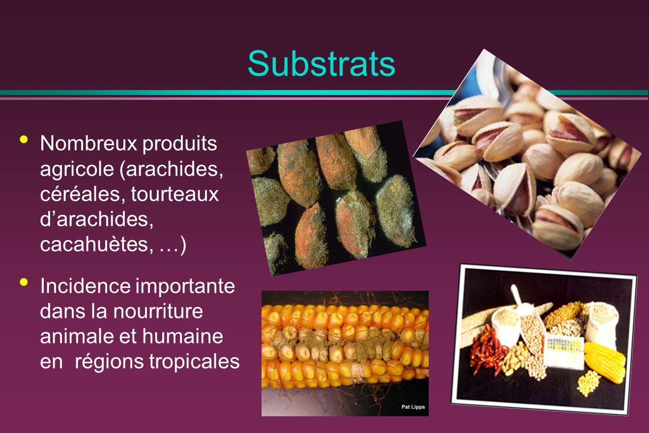 Substrats Nombreux produits agricole (arachides, céréales, tourteaux d'arachides, cacahuètes, …)