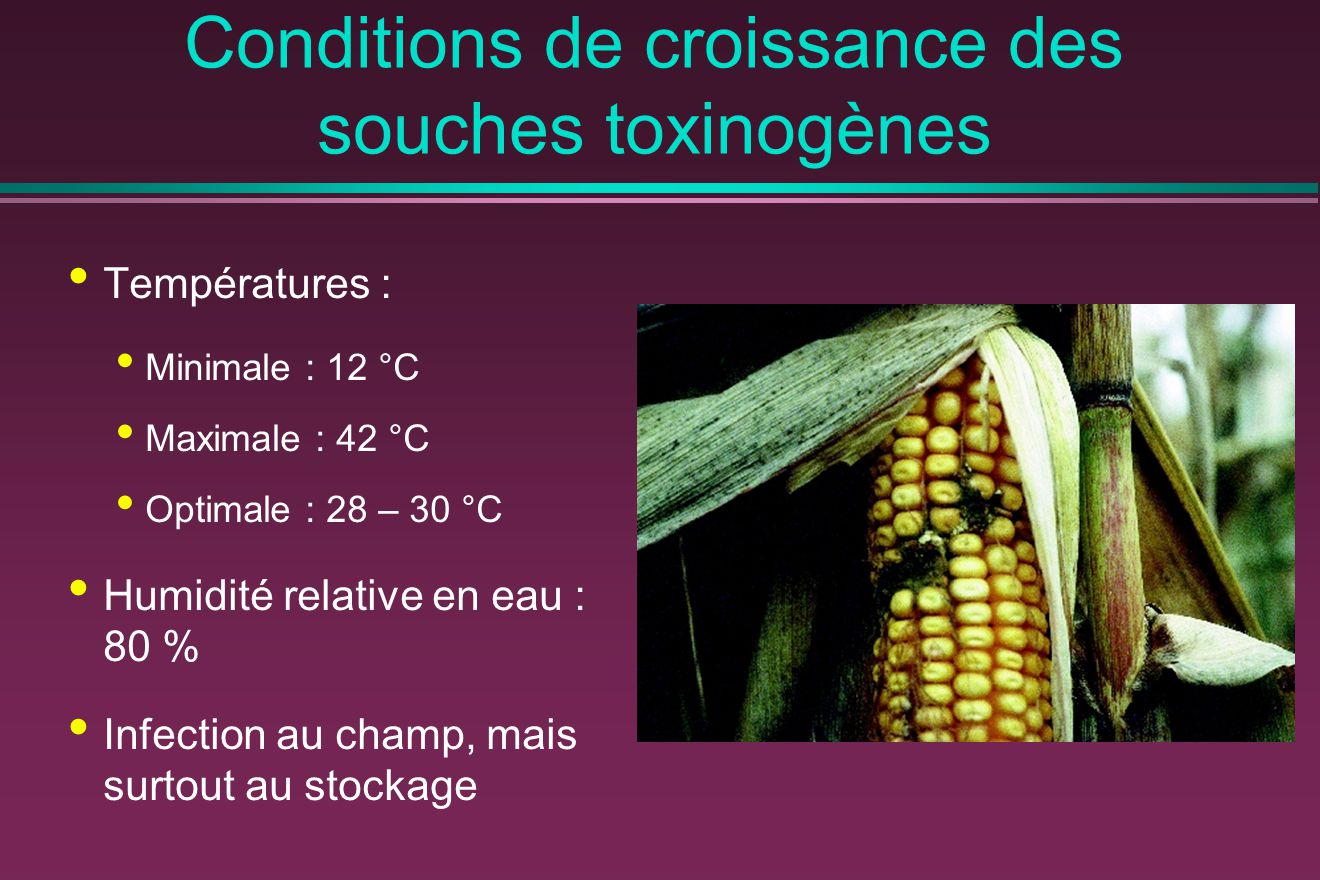Conditions de croissance des souches toxinogènes
