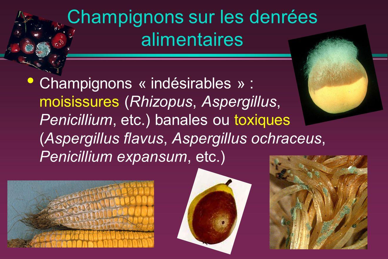 Champignons sur les denrées alimentaires