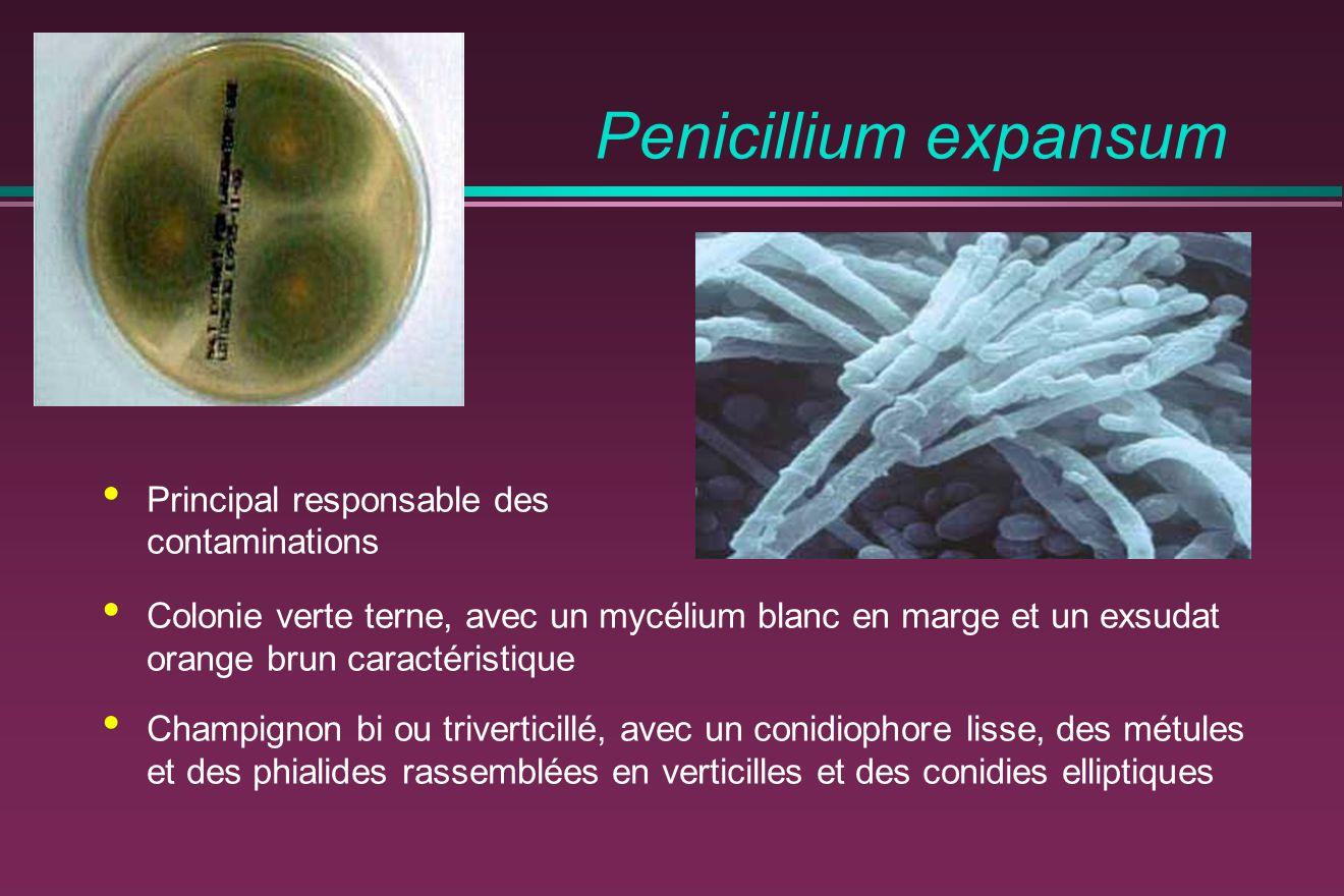 Penicillium expansum Principal responsable des contaminations
