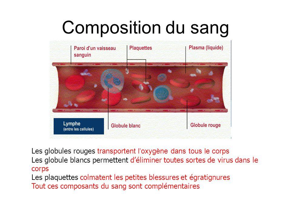 Composition du sang Les globules rouges transportent l'oxygène dans tous le corps.