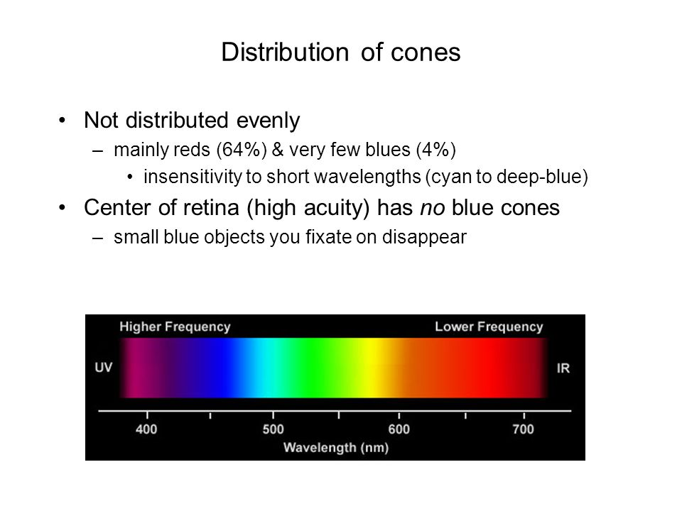 Distribution of cones Not distributed evenly