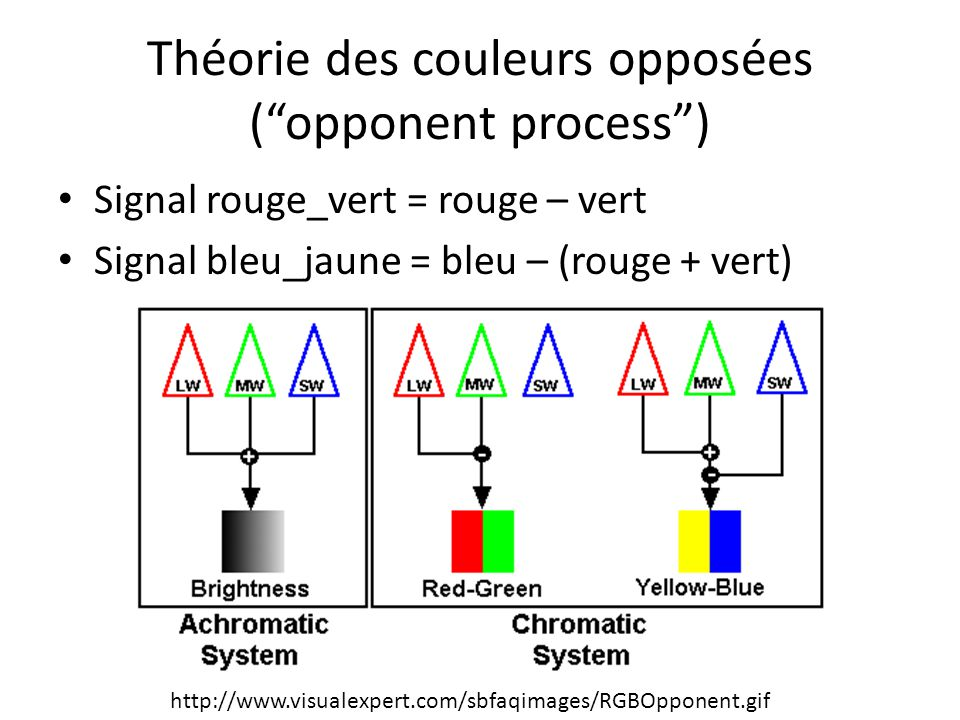 Théorie des couleurs opposées ( opponent process )