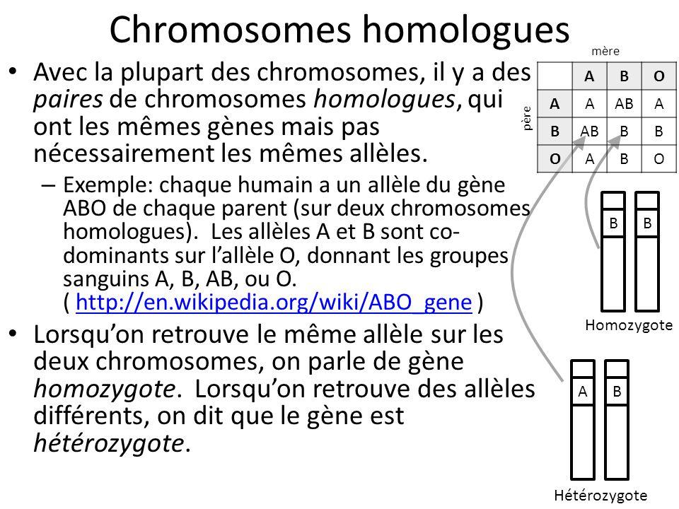 Chromosomes homologues