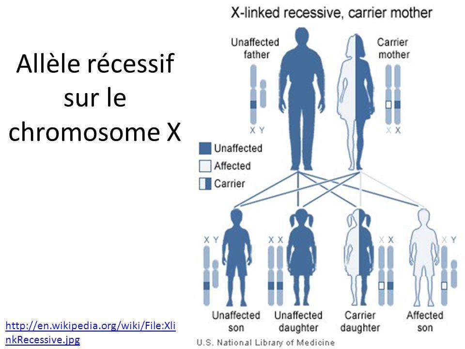 Allèle récessif sur le chromosome X