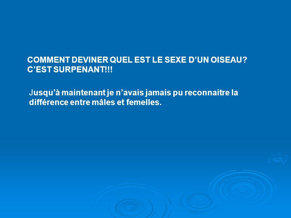 COMMENT DEVINER QUEL EST LE SEXE D'UN OISEAU C'EST SURPENANT!!!
