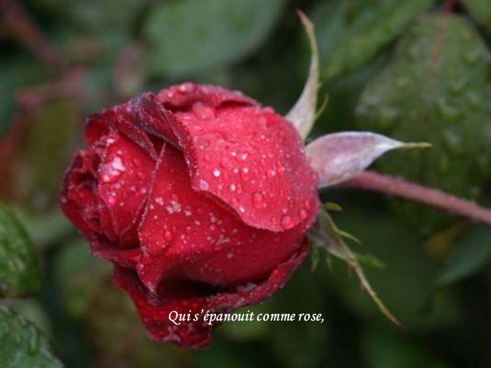 Qui s'épanouit comme rose,